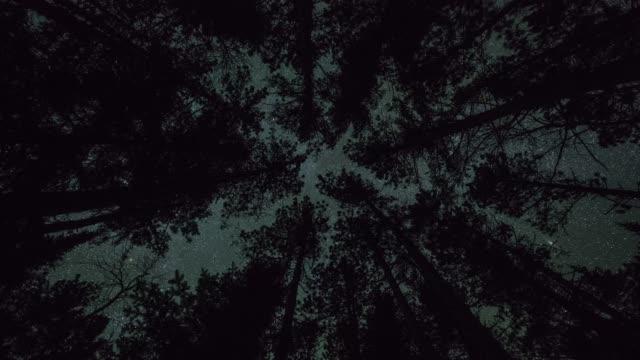 Estrellas-en-movimiento-sobre-un-dosel-de-bosque