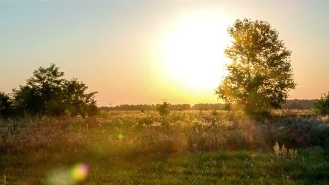 puesta-del-sol-a-través-del-árbol-4k-lapso-de-tiempo