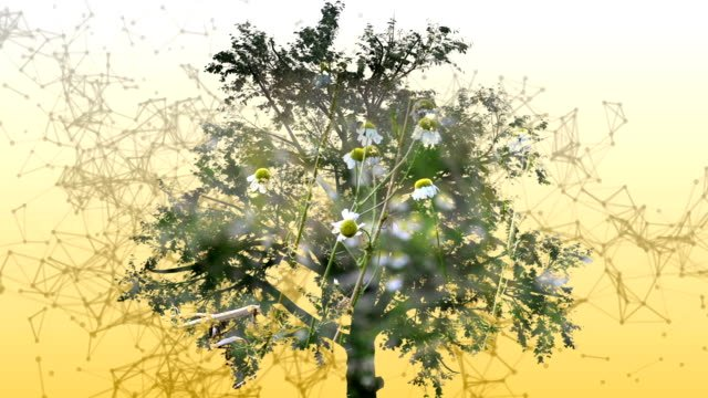 Mixed-media-of-two-3d-animation-from-tree-and-camomile-flowers