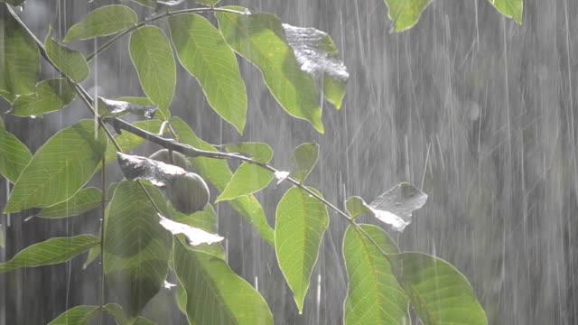 Heavy-rain-shower-downpour-cloudburst-rainfall-comes-in-the-daytime-