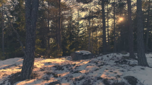 Tiro-de-Drone-volando-por-el-bosque-al-atardecer-Movimiento-aéreo-en-bosque-del-invierno