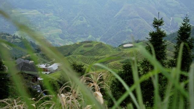 Las-terrazas-de-arroz-de-Longji