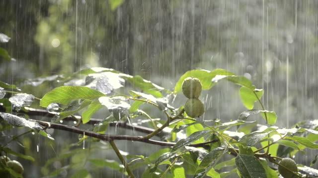 Precipitaciones-de-lluvias-ducha-aguacero-aguacero-viene-durante-el-día-