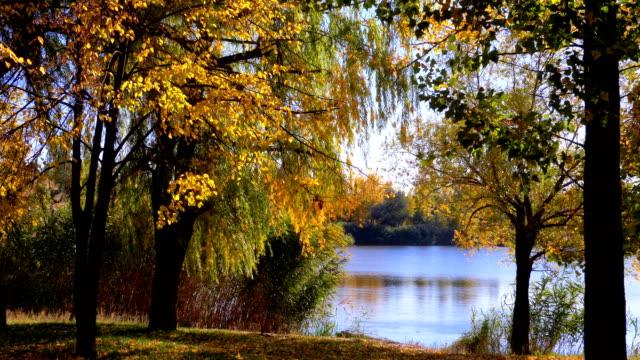 Herbst-gelb-Bäume-mit-Blättern-auf-den-Zweigen-der-im-Park-gegen-Fluss-oder-See