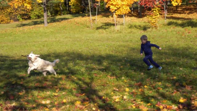 happy-little-boy-of-european-appearance-is-having-fun-playing-in-the-autumn-park-with-a-big-beautiful-dog