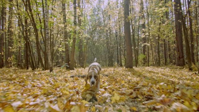 Hund-im-herbstlichen-Wald