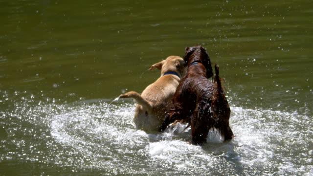 Hunde-spielen-im-Wasser-in-4-k-Slow-Motion-60fps
