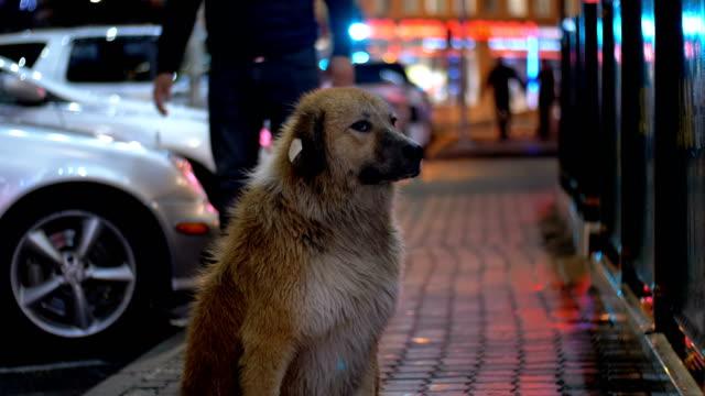 Perros-sin-hogar-se-encuentra-en-una-calle-de-la-ciudad-por-la-noche-en-el-fondo-de-pasar-coches-y-personas
