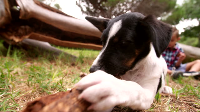 Playful-dog-playing-with-stick-a-little-in-Background