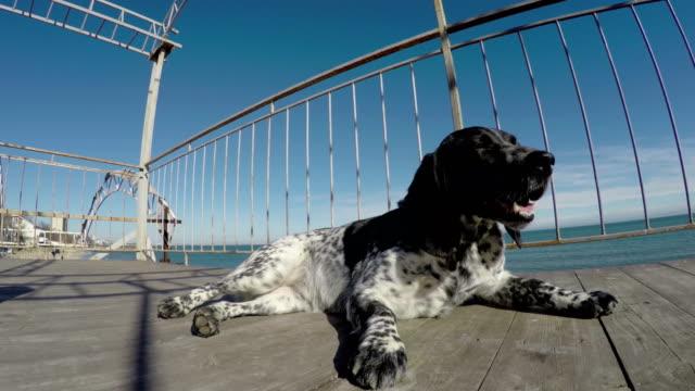 perro-descansando-frente-mar