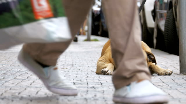 Crowd-of-Indifferent-People-on-the-Street-Pass-by-Sad-Tied-Faithful-Dog