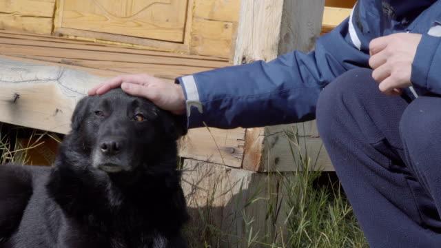Irreconocible-hombre-acariciar-perros-al-aire-libre-Vista-de-las-manos-y-un-perro