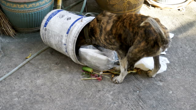 Homeless-Thin-and-Hungry-Dog-Dig-in-a-Garbage-can-on-the-Street-Asia-Thailand-Pattaya