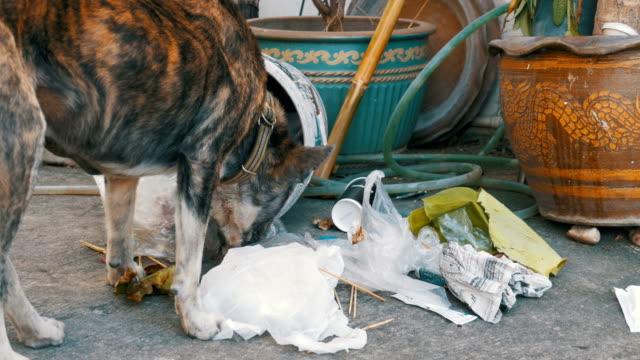 Desamparados-delgado-y-hambriento-perro-hurga-en-un-bote-de-basura-en-la-calle-Asia-Tailandia