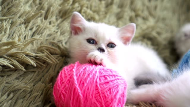 Close-up-portrait-of-kitten-with-balls-of-threads