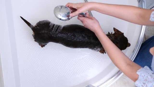 Woman-washing-her-little-dog-in-bath