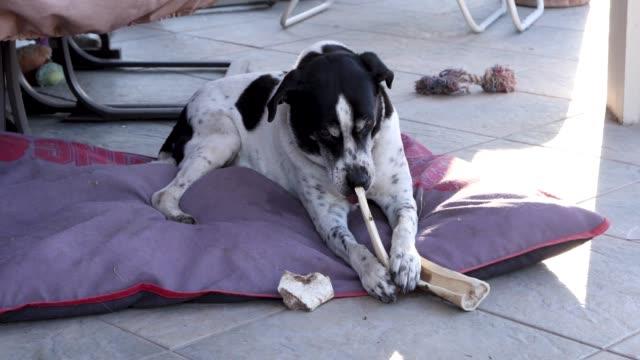 Dog-with-a-Bone-