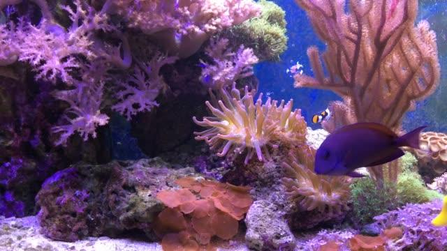 Marine-aquarium-full-of-tropical-fishes-and-plants-