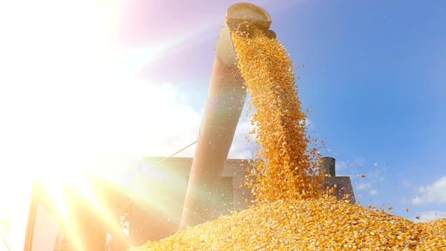 Cosecha-maíz-lenta