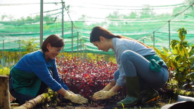 Frauen-die-Blumen-im-Garten-Pflanzen