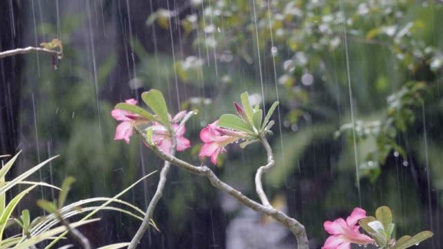 Caída-de-lluvia-en-el-jardín-botánico-tropical