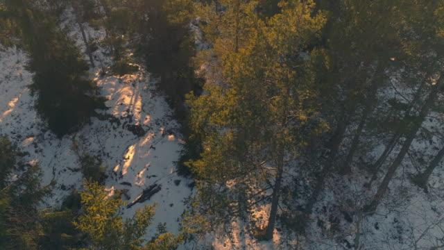 Vista-aérea-del-bosque-al-atardecer-Tiro-de-zánganos-sobrevolando-encima-de-árboles-spruce-en-paisaje-de-invierno-Fondo-naturaleza-hermosa-en-4K