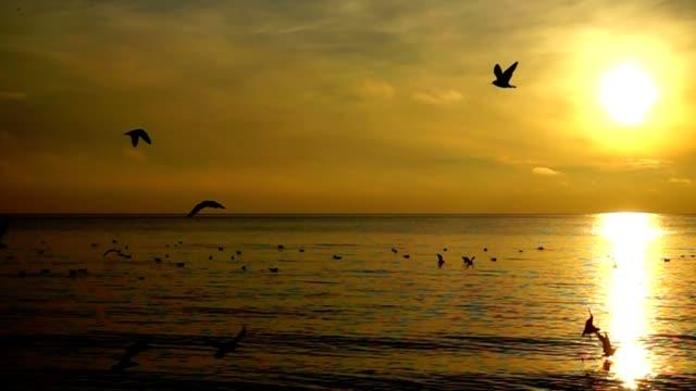 Gaviotas-sobre-el-mar-Cámara-lenta-
