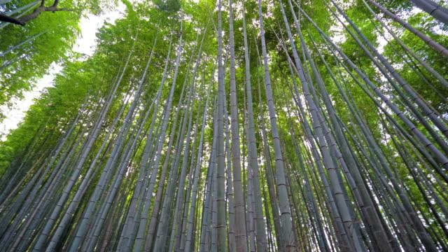 Beautiful-bamboo-forest-in-Arashiyama-Kyoto-city