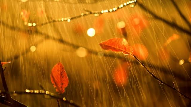 Herbst-Regen-Nahaufnahme