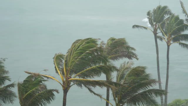 Tropical-Storm-Winds-Blow-Palm-Trees