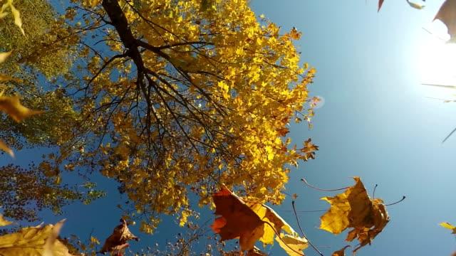 Colores-rojo-y-amarillo-follaje-de-otoño-las-hojas-cayendo-en-cámara-lenta