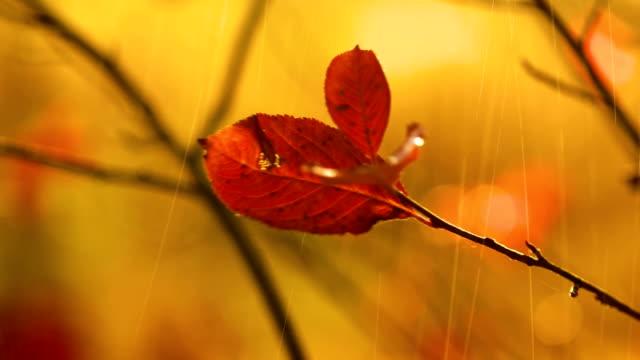 Primer-plano-de-lluvia-otoñal