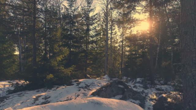 Tiro-de-Drone-volando-por-el-bosque-al-atardecer-Movimiento-aéreo-en-bosque-de-abetos-Nevado-Volando-sobre-fondo-de-piedra-roca-hermosa-naturaleza
