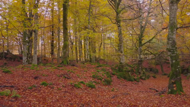 Colored-forest-in-autumn