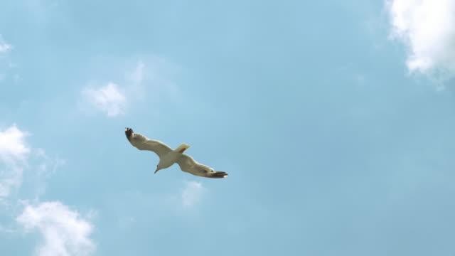 Möwen-fliegen-in-den-Himmel-über-dem-Meer-von-einem-Schiff-in-Italien-