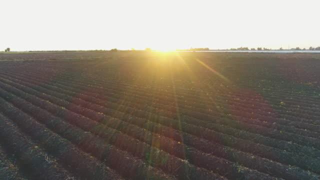 Yeni-ekilmiş-tarlalar-21/5000-recién-plantado-campos