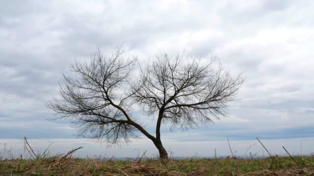 Hermoso-árbol-de-Time-lapse-cielo-4k