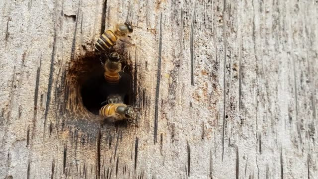 Bees-nest-as-a-team-On-the-wood-slow-motion-and-slow-motion-