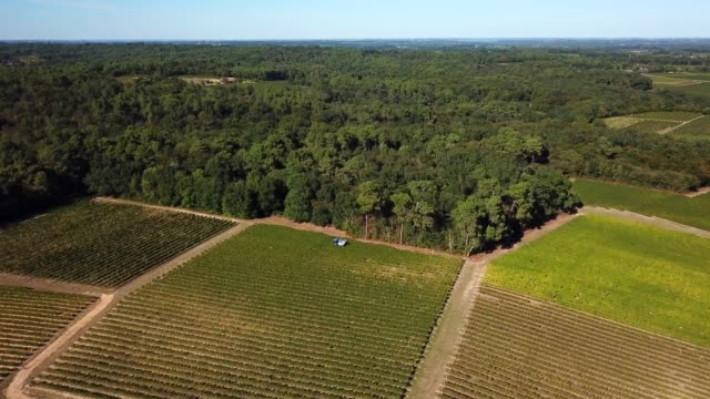 Grape-harvesting-machine-Aerial-view-of-Wine-country-harvesting-of-grape-with-harvester-machine-drone-view-of-Bordeaux-vineyards-landscape-France