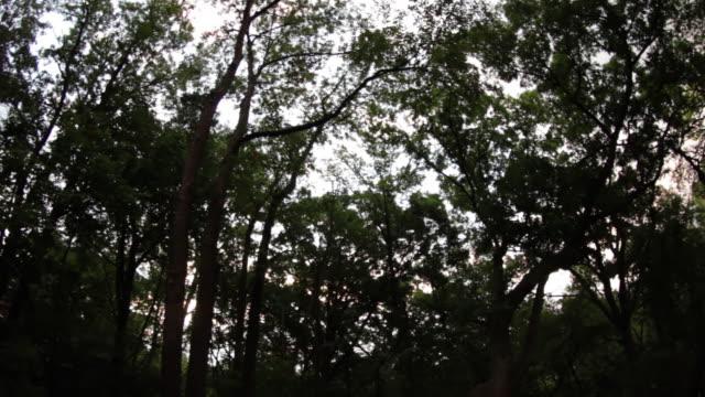 Sun-Rise-Through-Trees-Time-Lapse