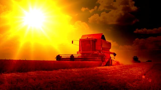 Cosecha-trigo-puesta-del-sol