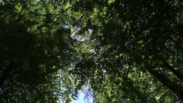 Sonnenschein-spähen-durch-Wald-verlässt-2