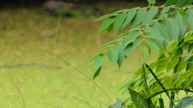Leaf-on-branch-in-public-park-