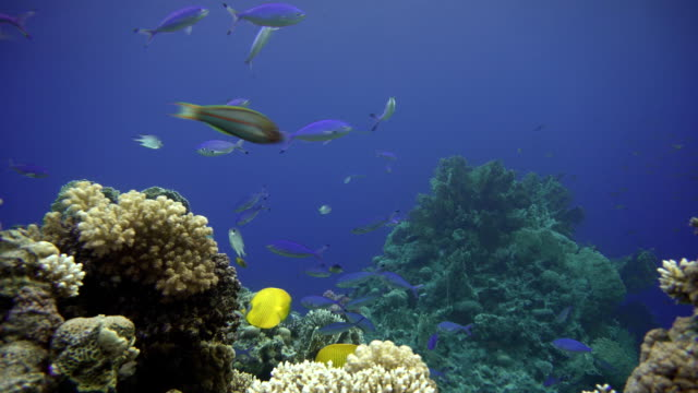 Coral-reef-and-beautiful-fish-Underwater-life-in-the-ocean-