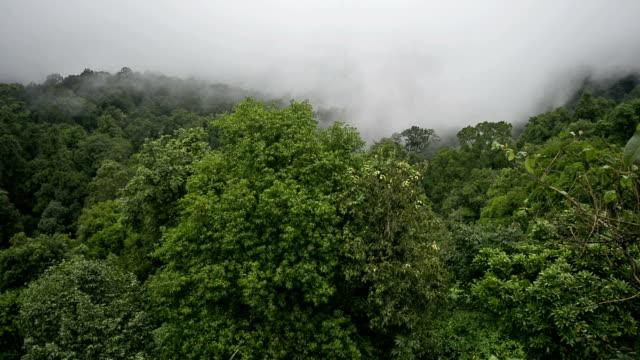 Tropical-forest-during-monsoon-rain-season