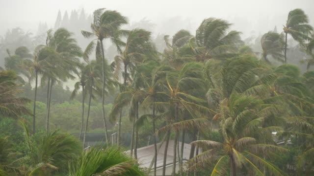 Regen-fällt-auf-Palmen-auf-der-Insel-Oahu