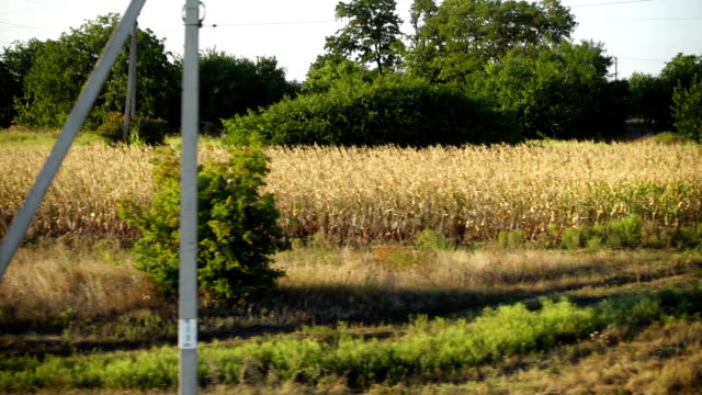 Agricultural-fields-