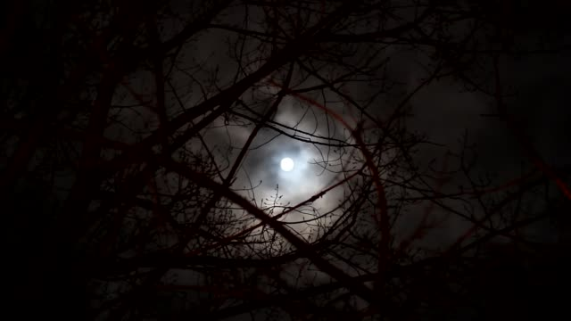 Luna-llena-en-un-cielo-nublado-a-través-de-las-ramas-de-los-árboles