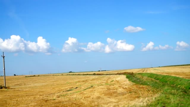 Agricultural-field-
