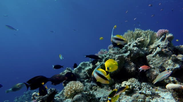 The-amazing-world-of-a-coral-reef-Beautiful-coral-flowers-and-tropical-fish-
